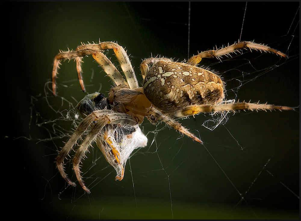 It´s spidertime