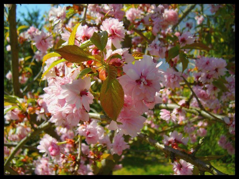 it`s springtime