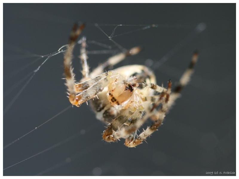 Itsy Bitsy Spider. 02.