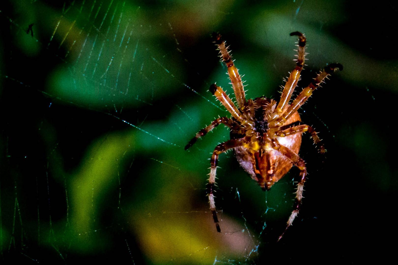 Itsy Bitsy Spider 1