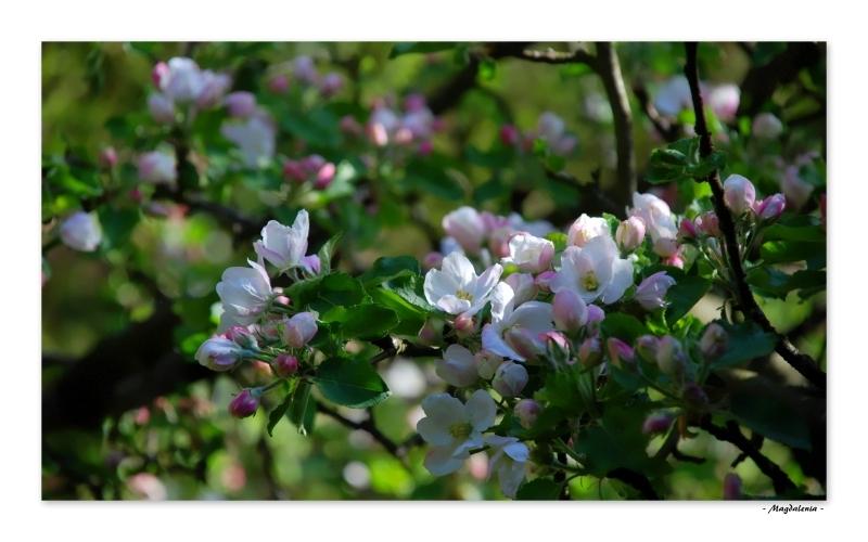 Ivresse florale