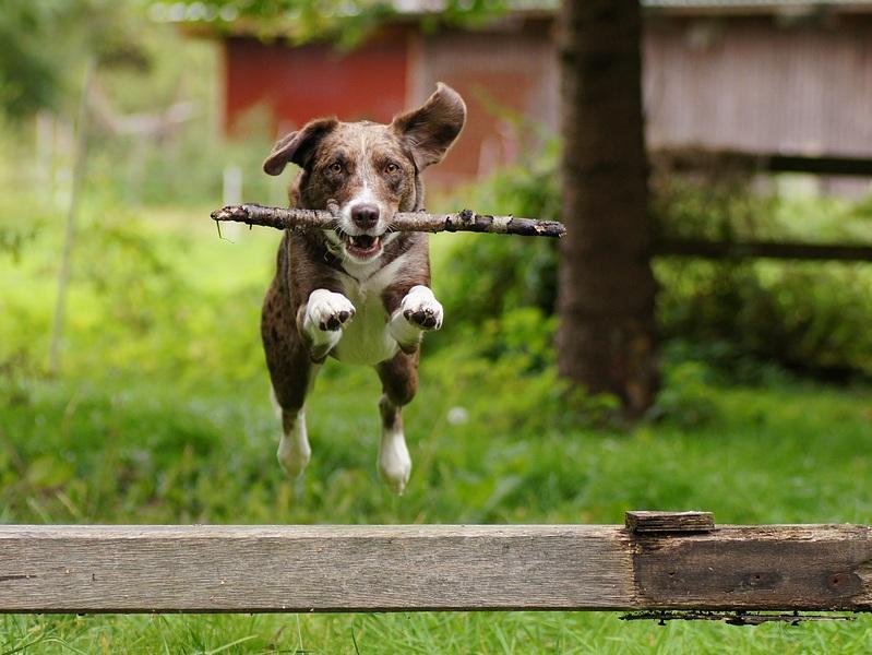 Ivy jumping