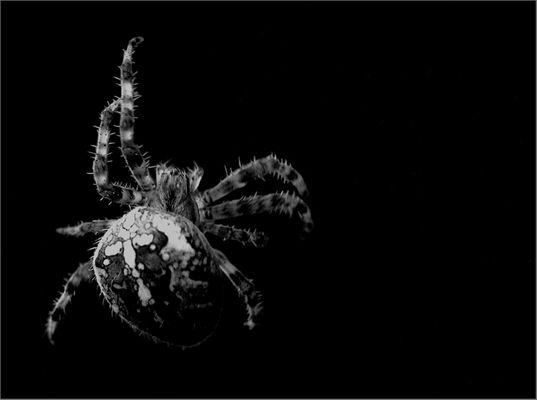 Ize Bize Spider ..