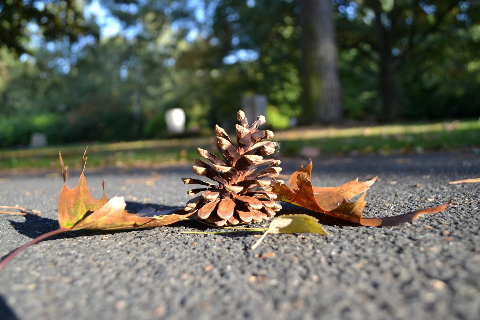 Ja, der Herbst kommt...