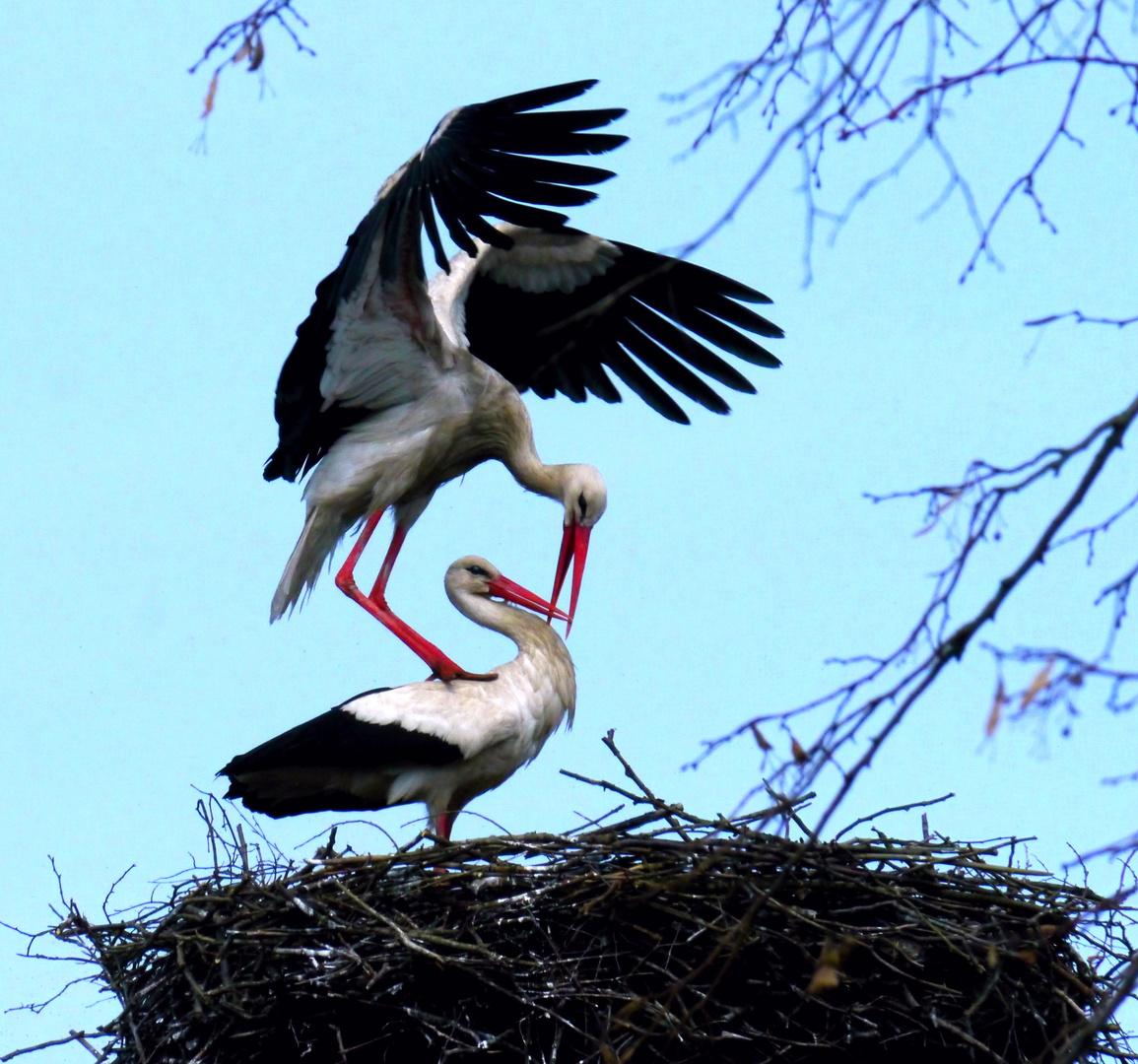 Ja, die Liebe hat schwarze Flügel...