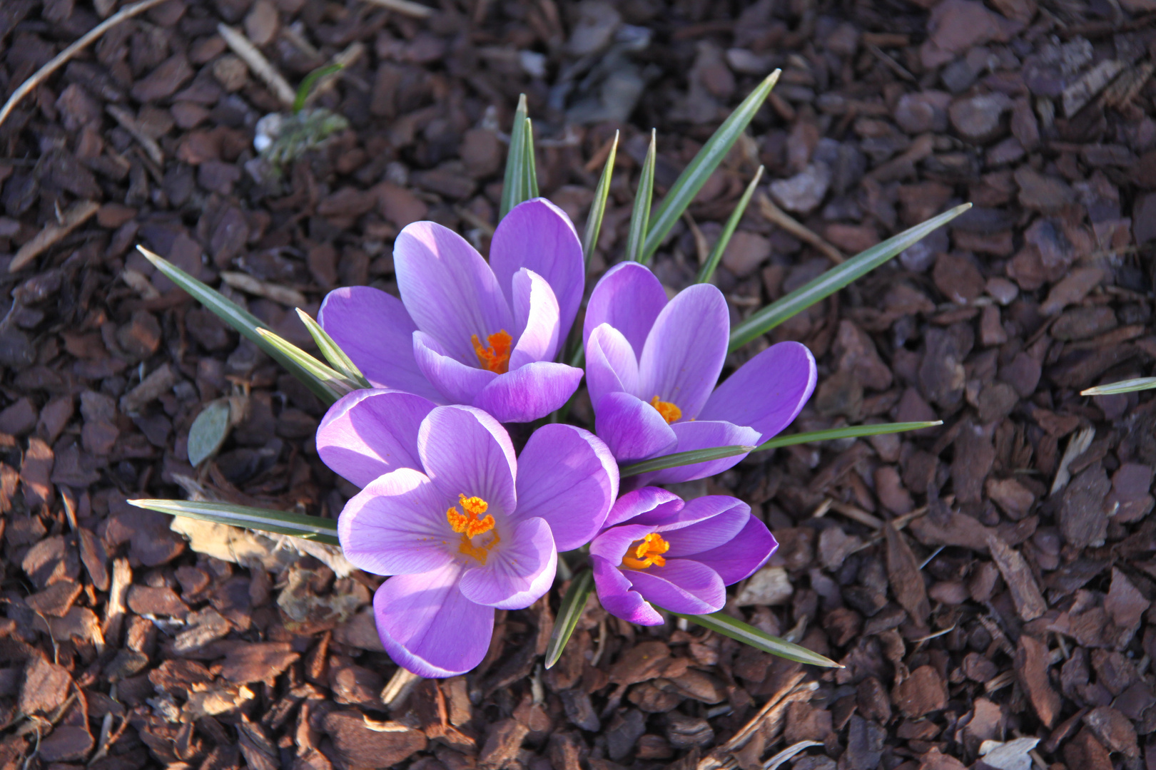 Ja ich will ... Frühling