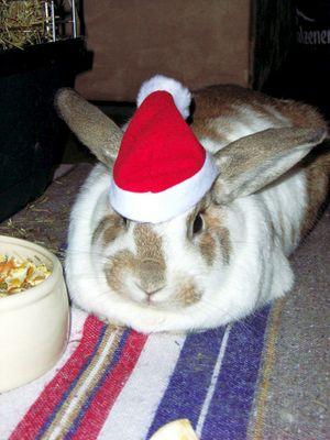 Ja ist denn scho wieder Weihnachten?