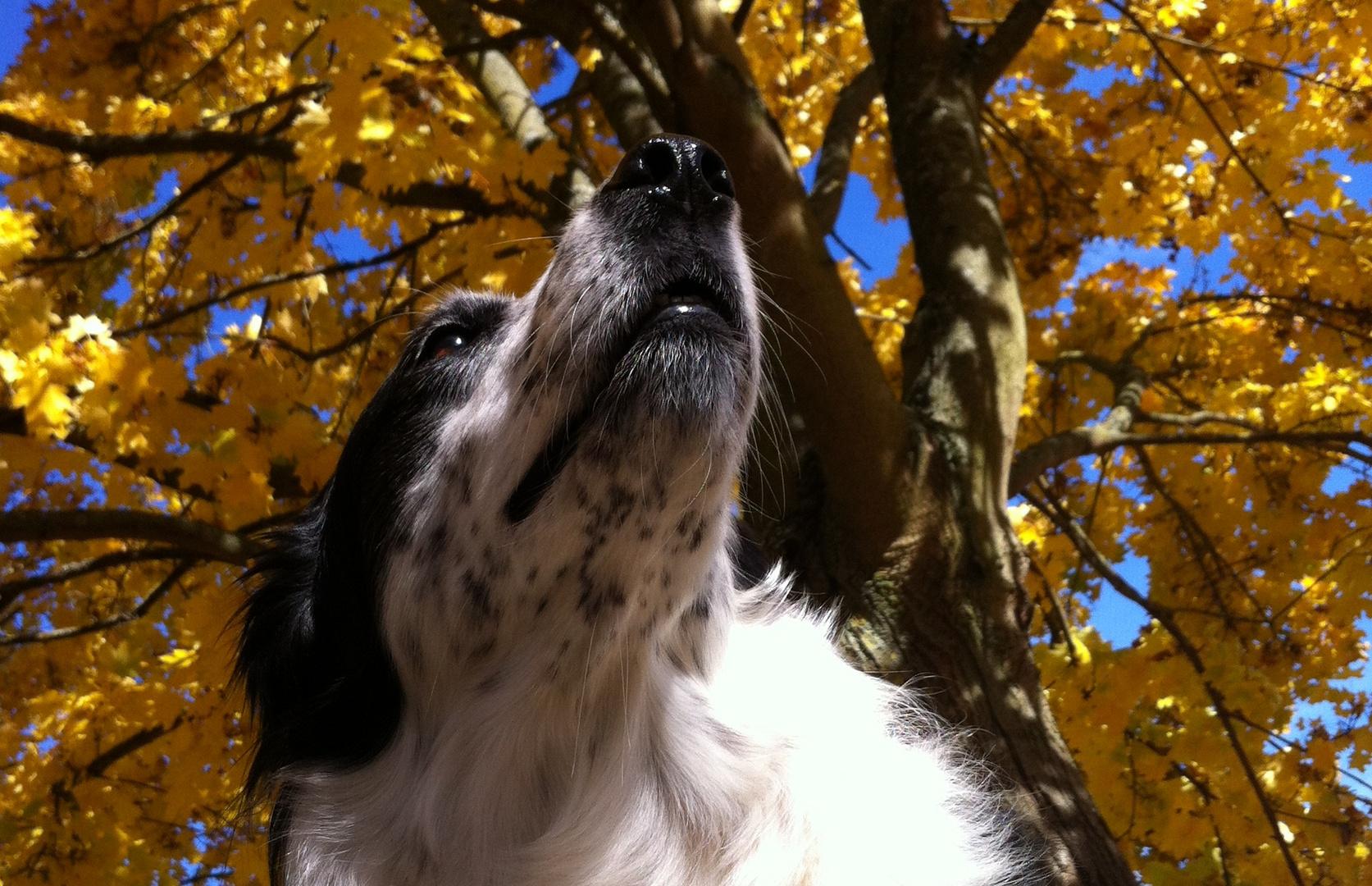 Ja ist denn schon Herbst?