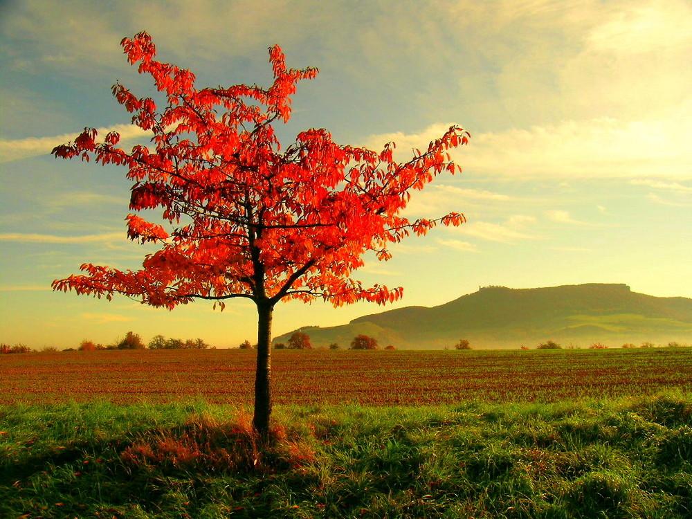 Ja ja es ist Herbst