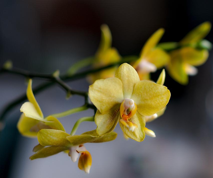 Ja, ja, immer diese Orchideen...