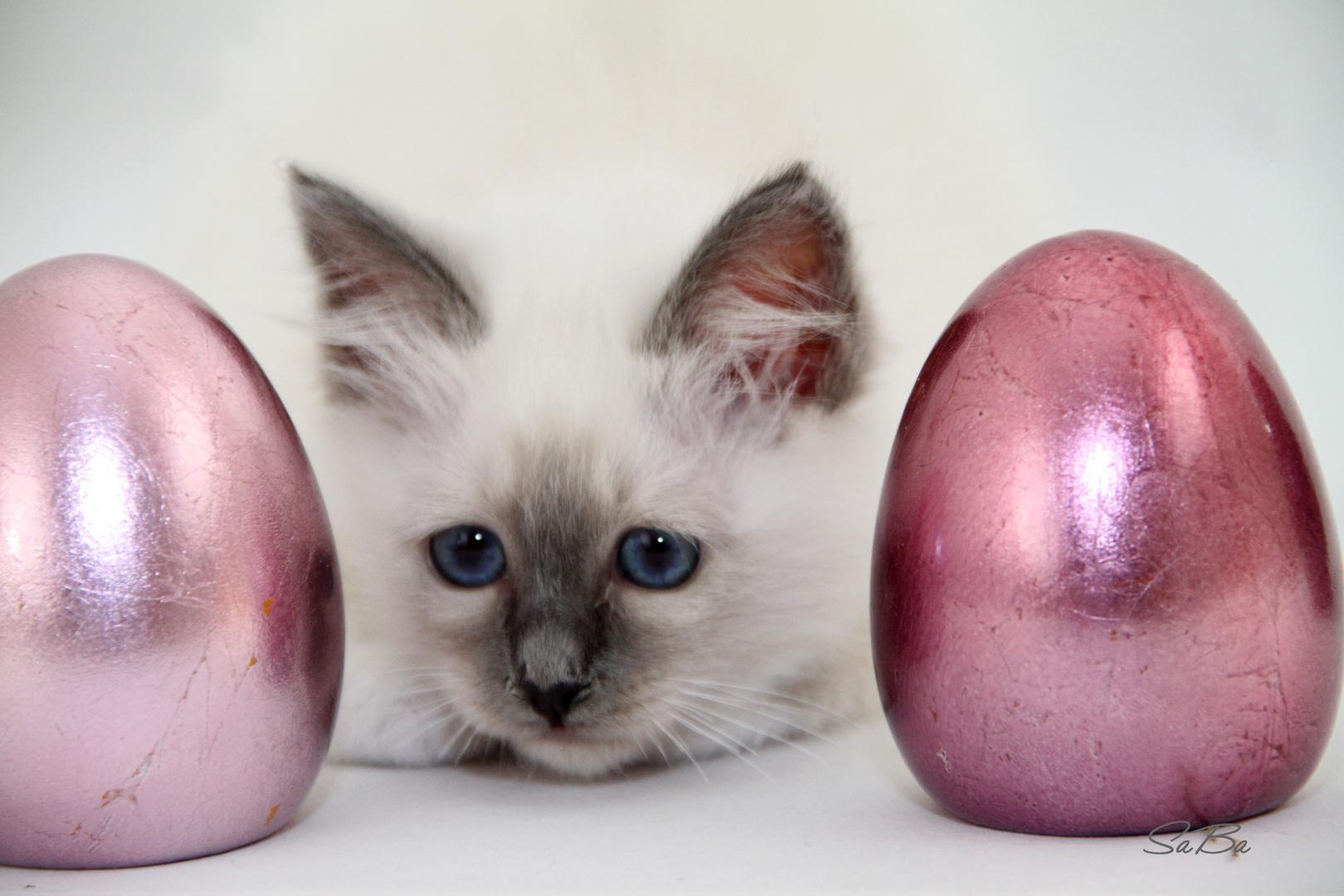 Ja wer hat denn hier die Eier vergessen...