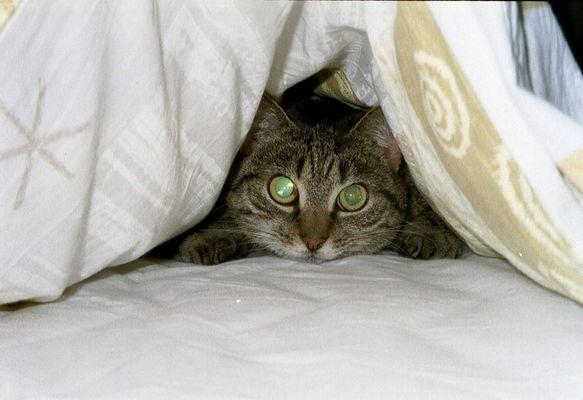 Ja wer liegt denn da unter der Bettdecke???