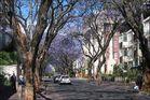Jacarandasbäume in Johannesburg