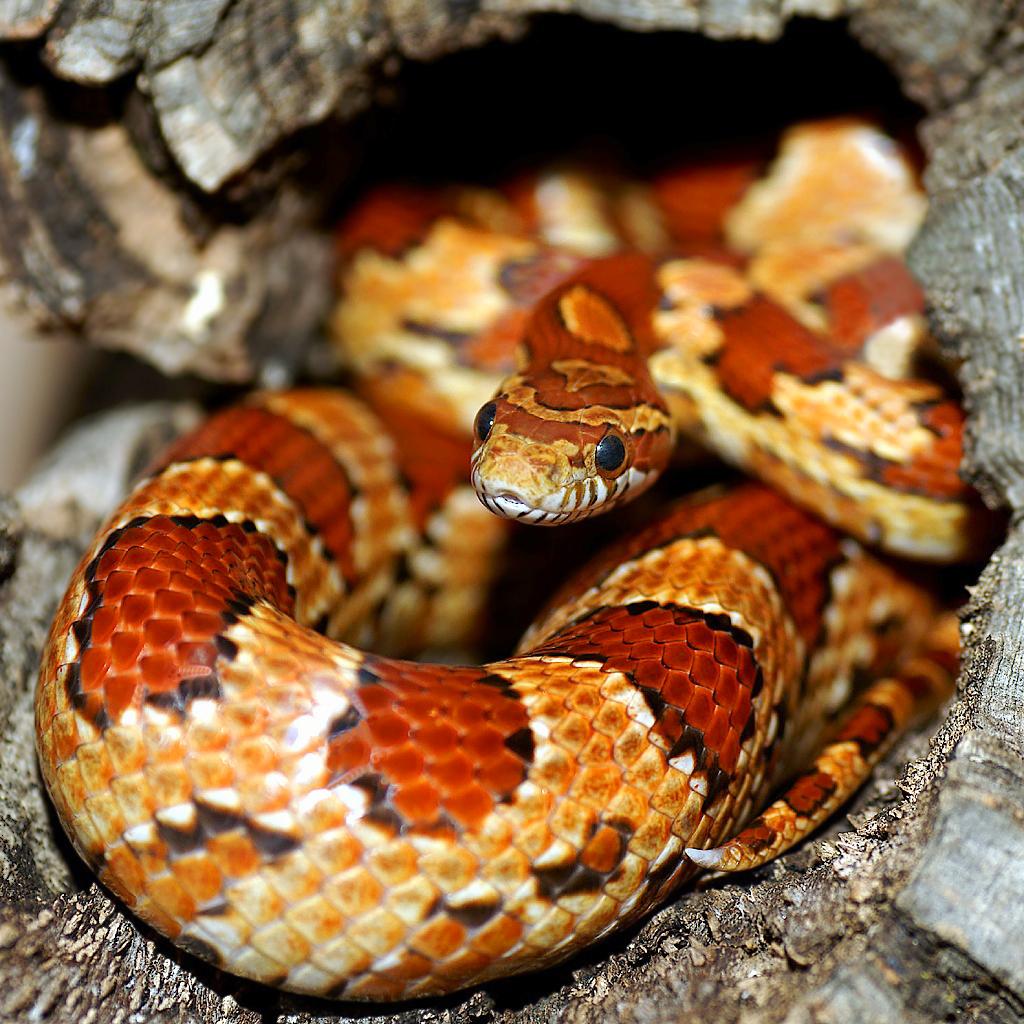 Jack the Snake