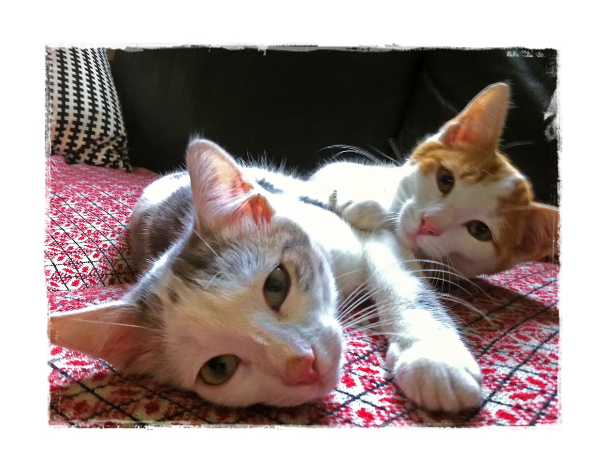 Jacky und Jimmy