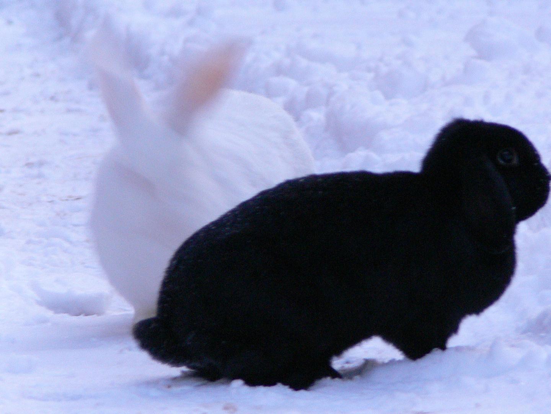 Jacky und Rocky