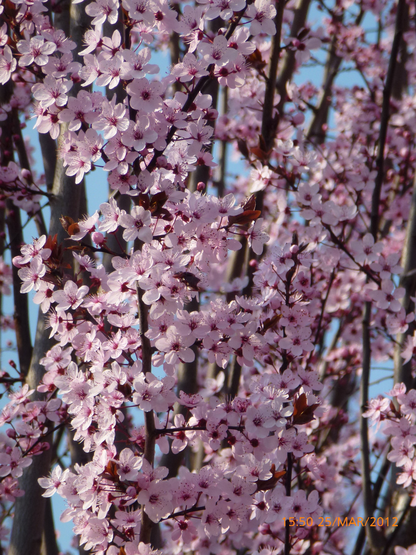 J'adore le printemps!!!