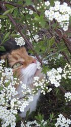 J'adore sentir les fleurs