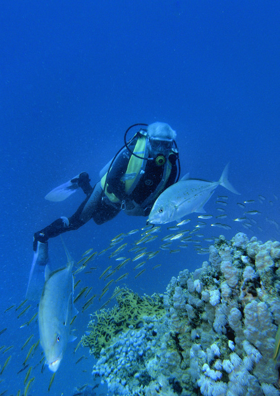 Jäger am Riff