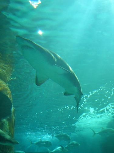 Jäger des Meeres
