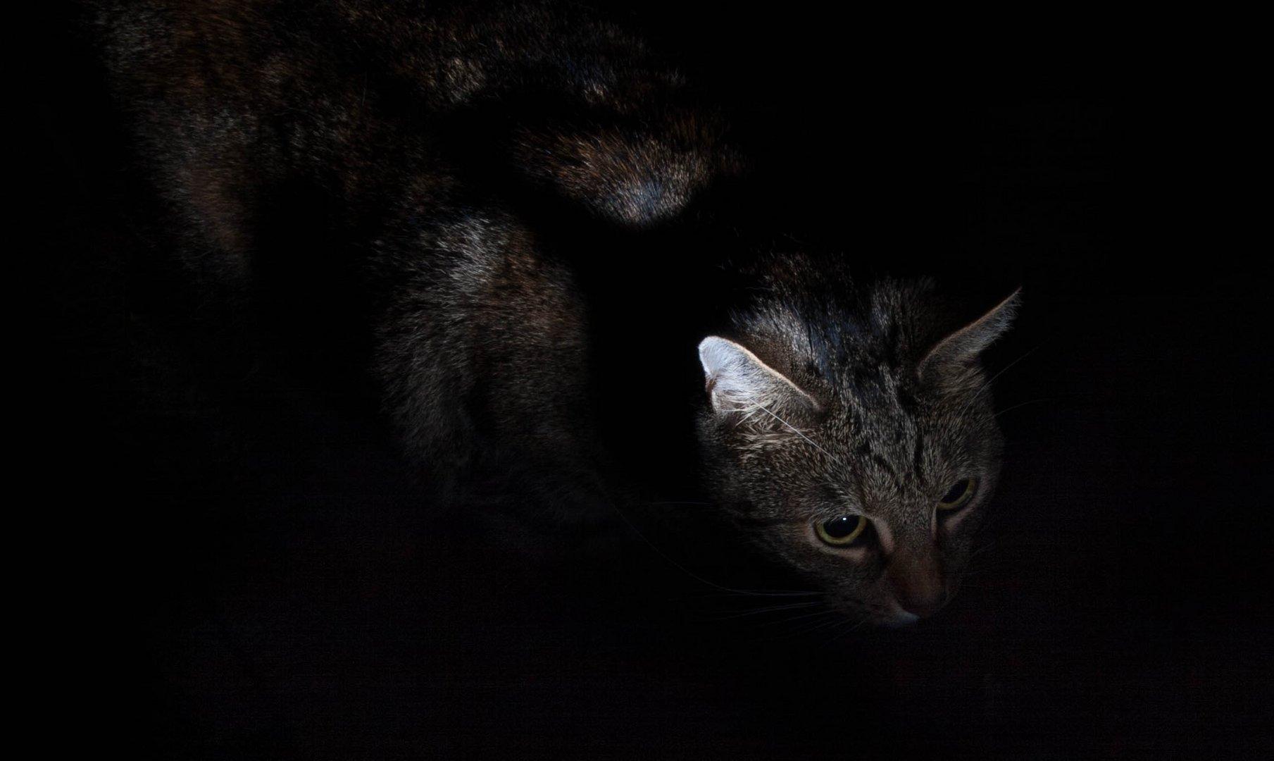 Jäger in der Nacht!