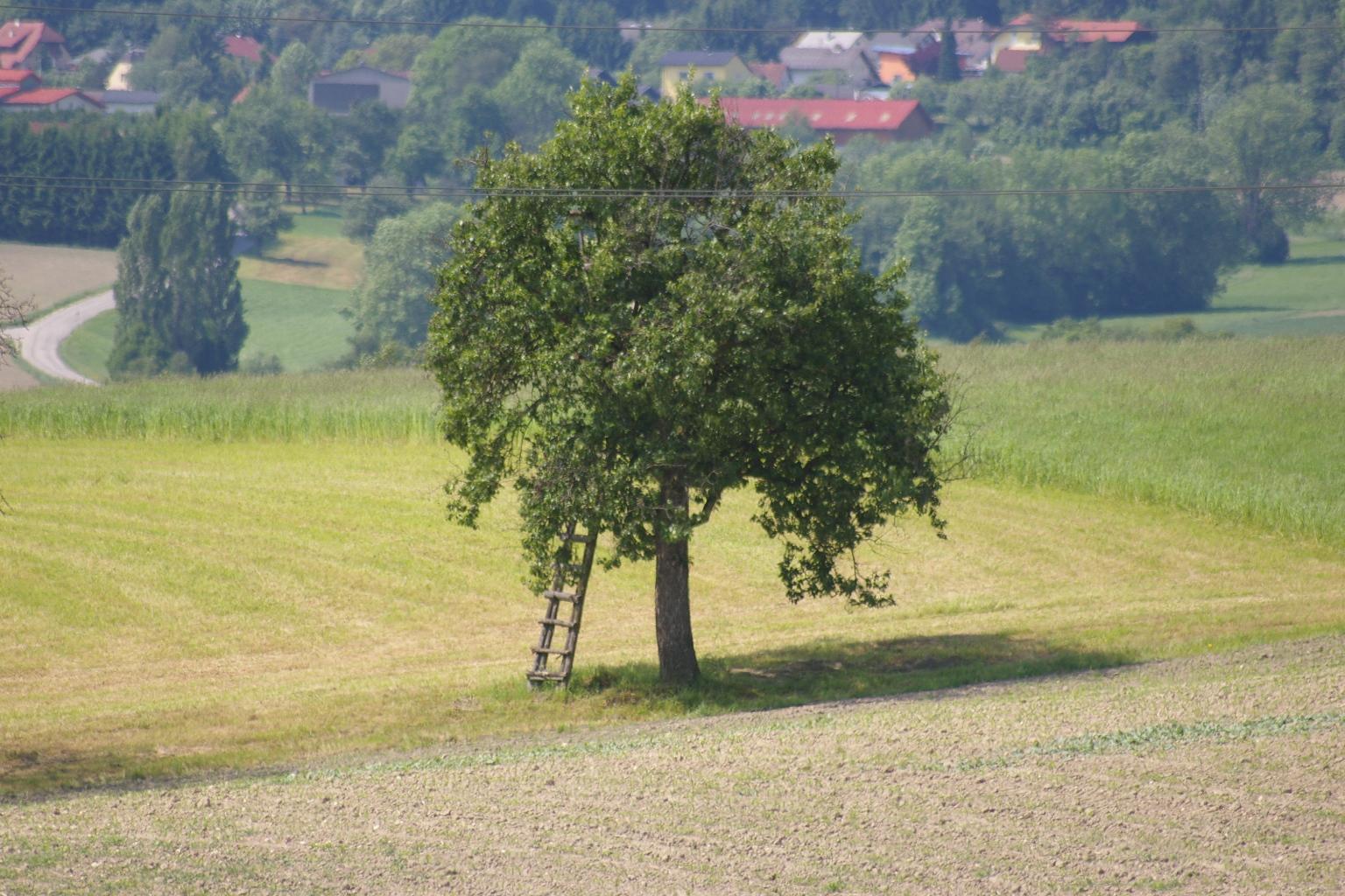 Jägerhochstand im Baum