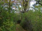 Jägersitz im Baum 2