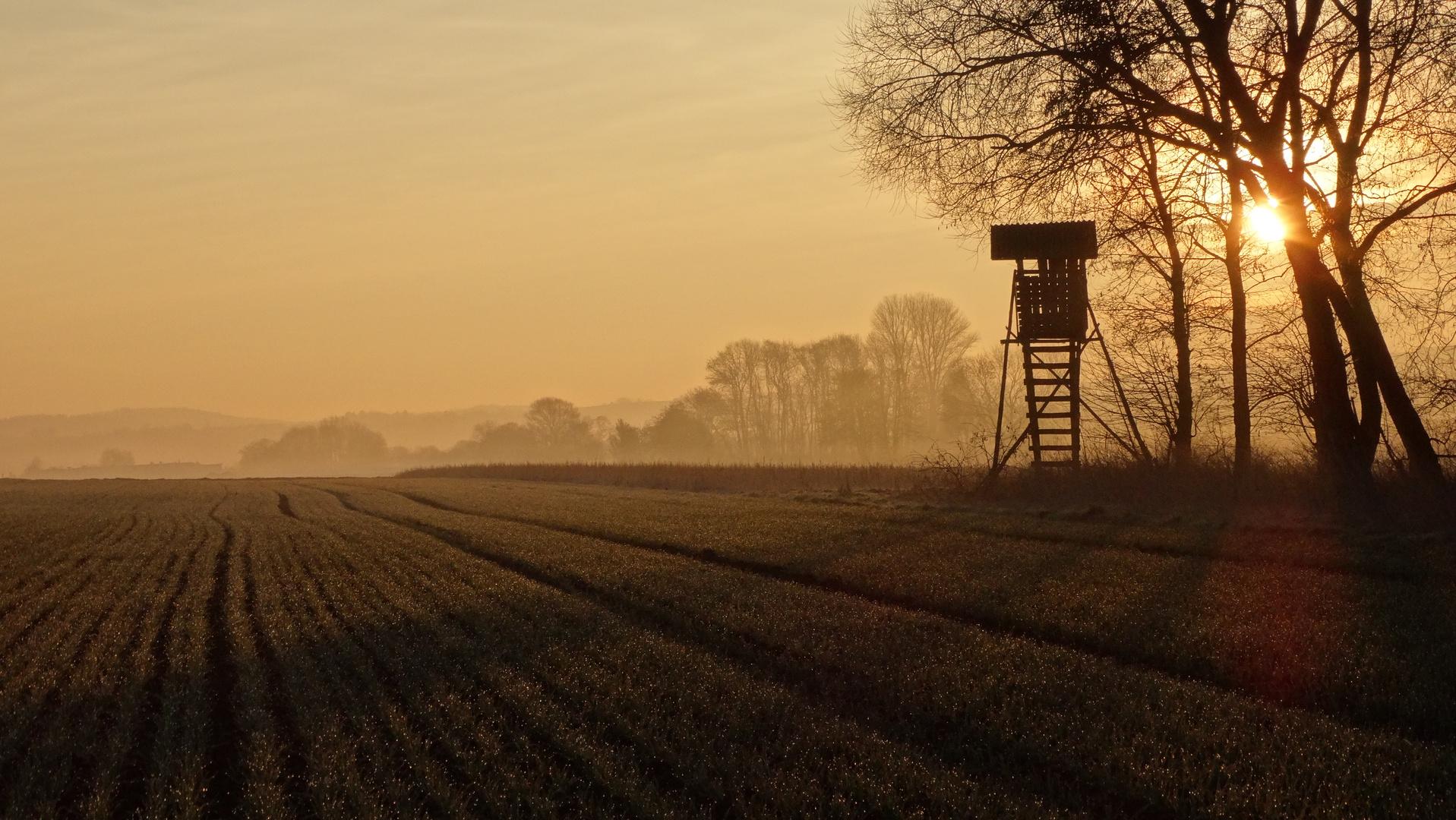 Jägersitz im Sonnenaufgang