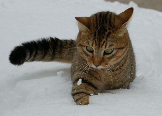 Jagd auf Schneeklumpen