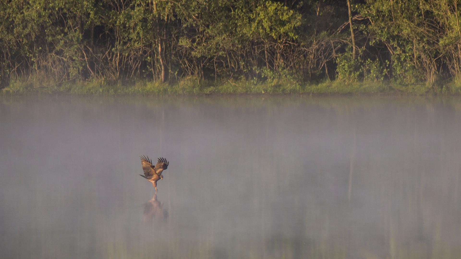 Jagd im Nebel
