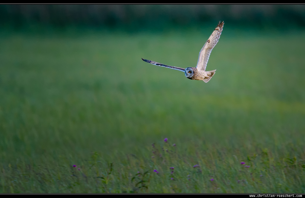 Jagdausflug am Abend