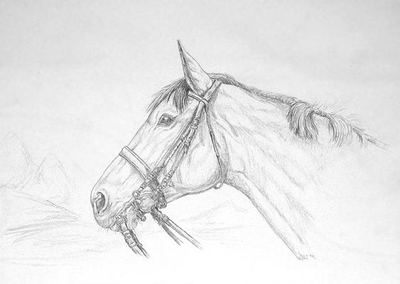 Jagdpferd