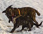 Jagen im Schnee