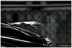 -jaguar-