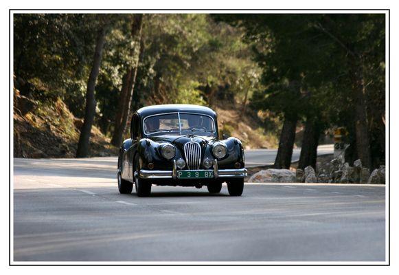 Jaguar auf der Jagd in den Bergen von Mallorca