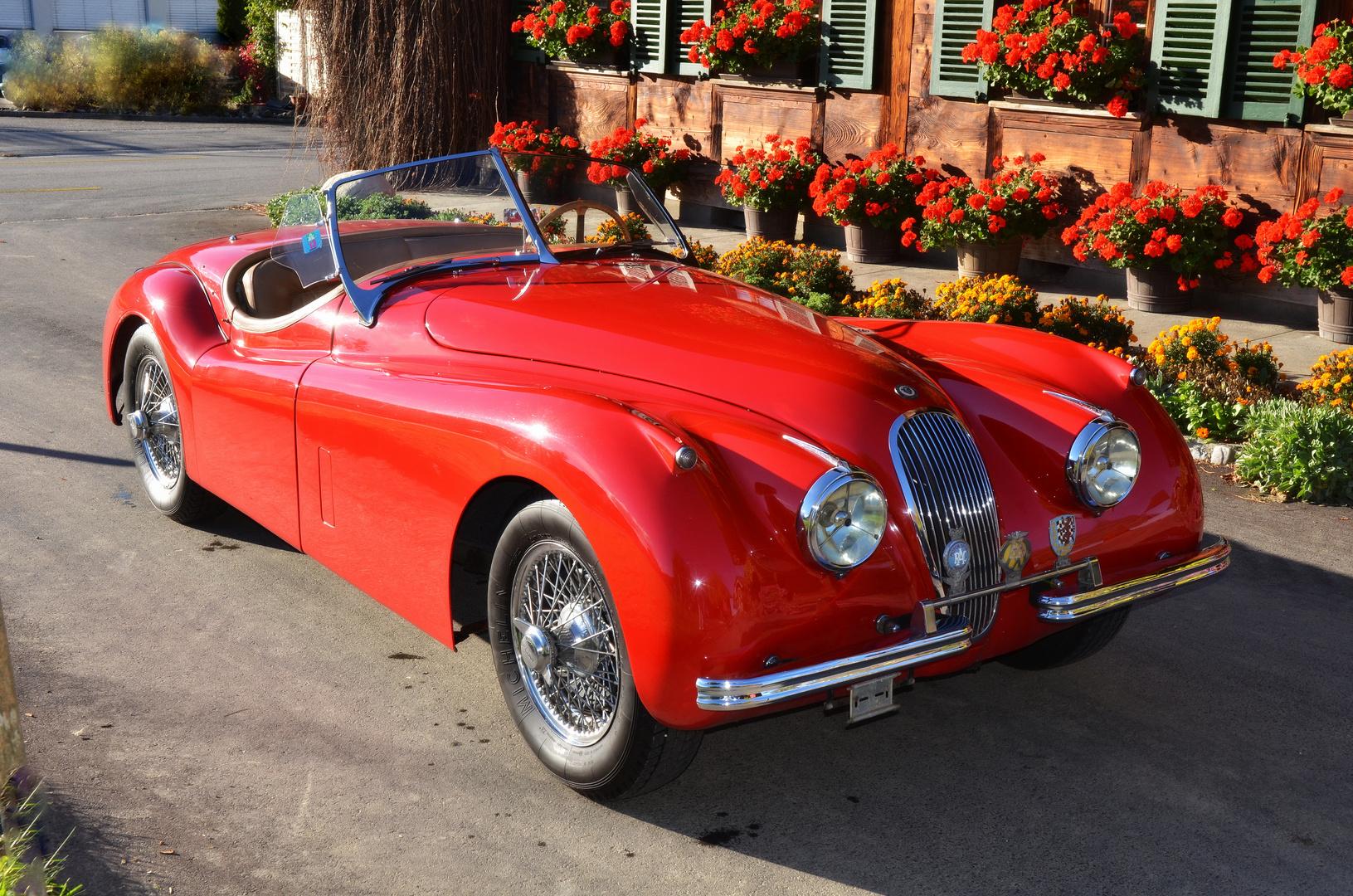 Jaguar Fahrt nach Belp