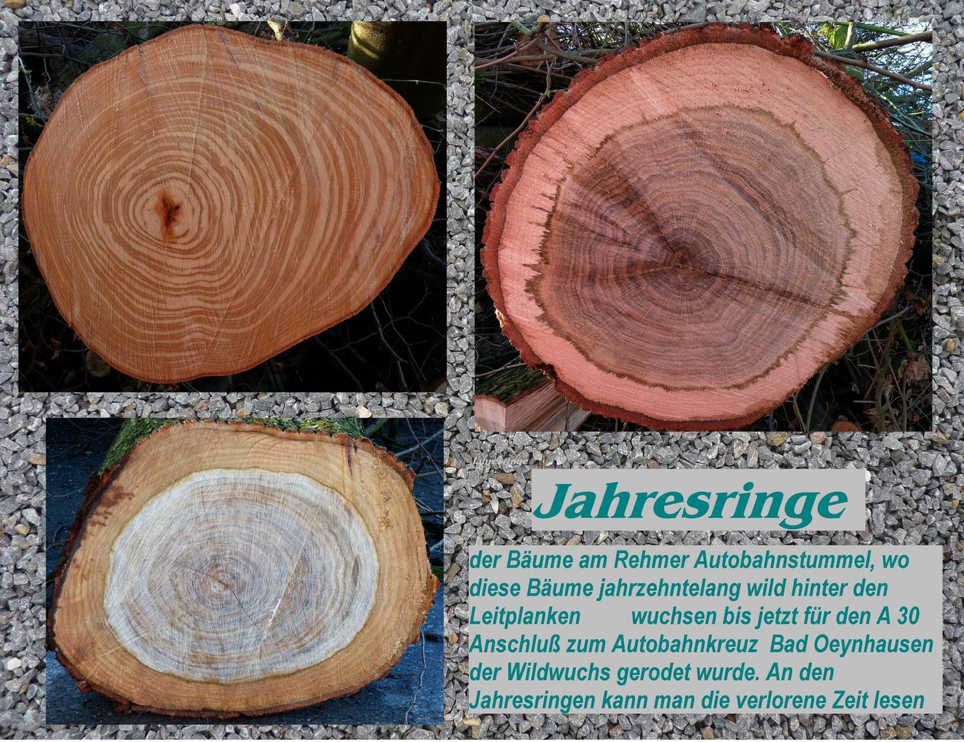 Jahresringe der A 30 Bäume