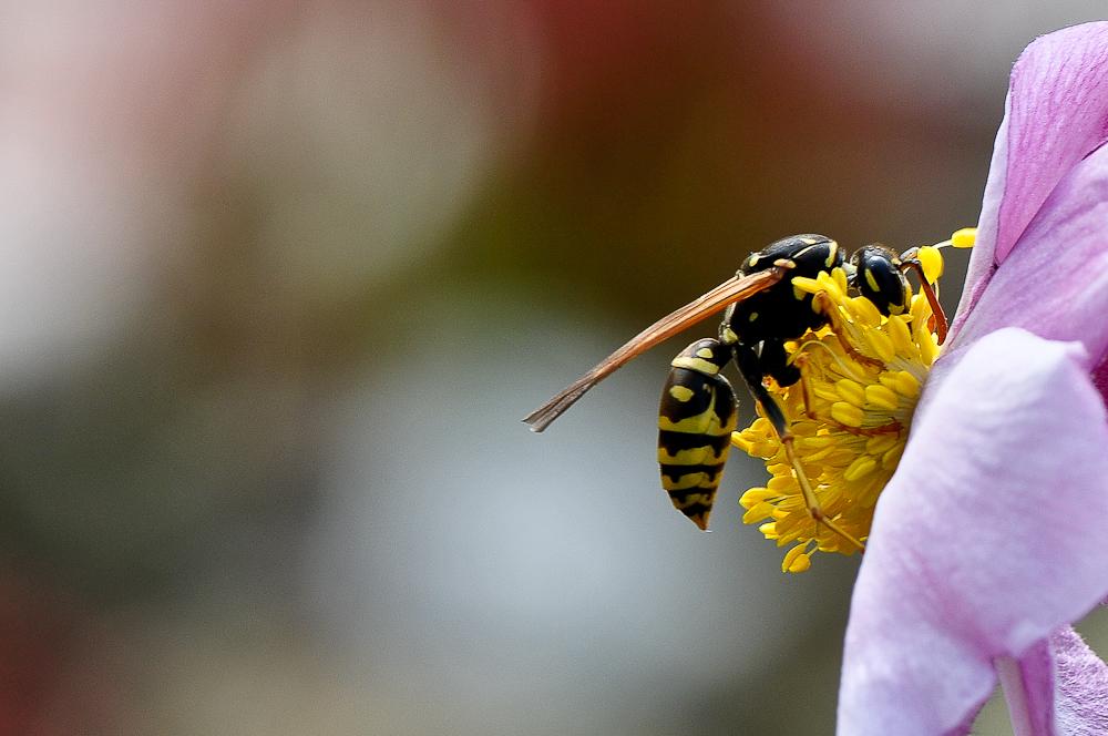 Jahreszeit der Wespen