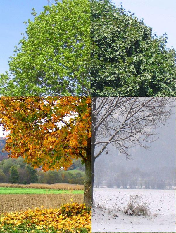 Jahreszeitenbaum