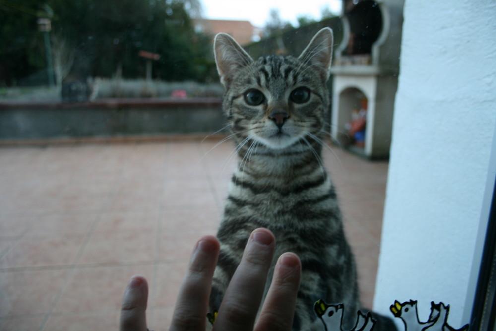 J'ai beaucoup étudié les philosophes et les chats. La sagesse des chats est infiniment supérieure.
