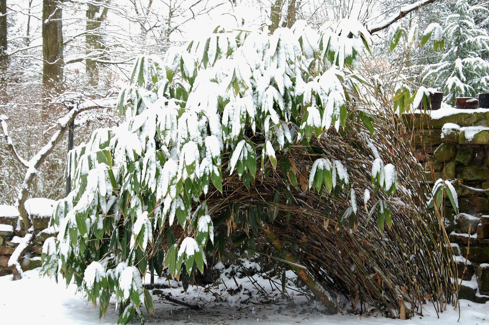 J'ai besoin de soutien. Je croule sous le poids de la neige.
