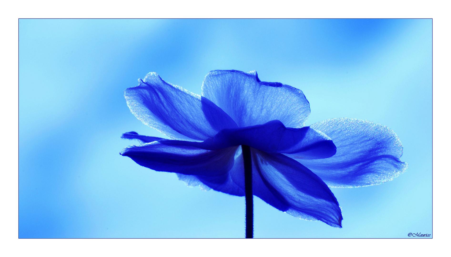 j'aime bleu