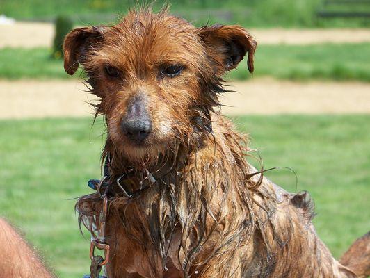 J'aime pas le bain !