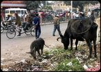 Jaipur is a very clean city.............