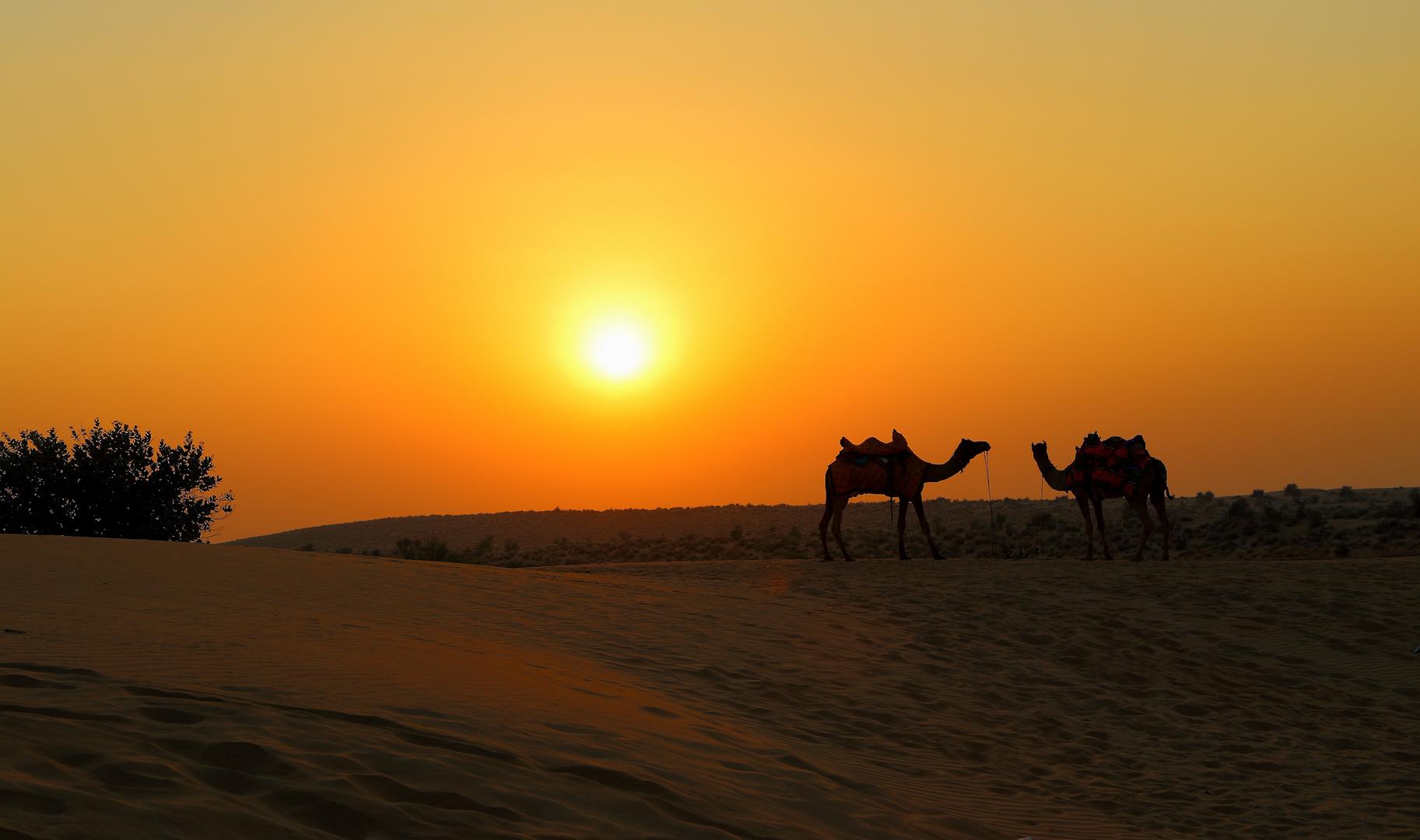 Jaisalmer IV