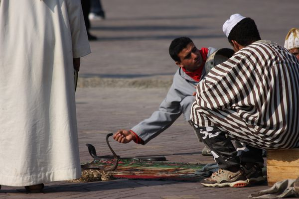 Jamal el fna Schlangen-Beschwörer