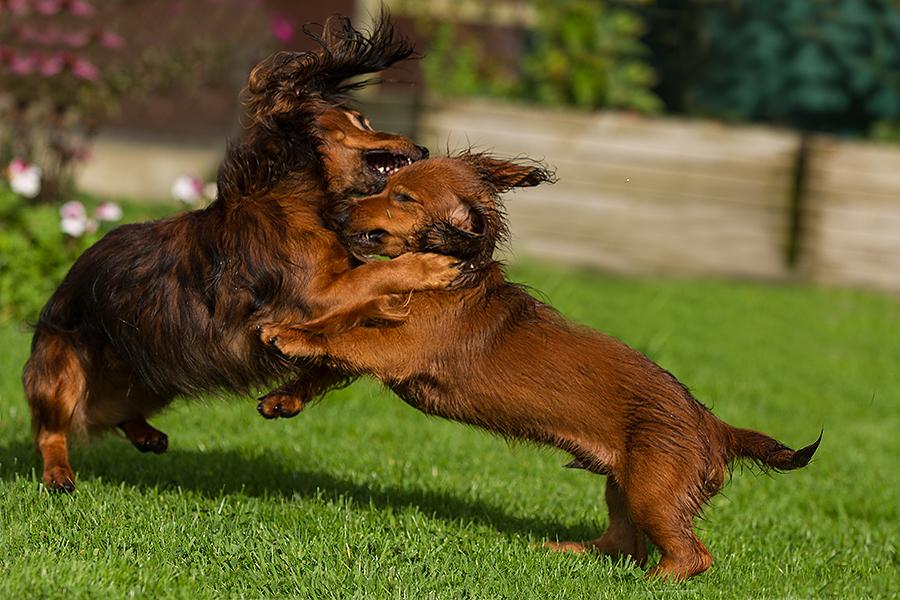 Janosch gegen Beaver