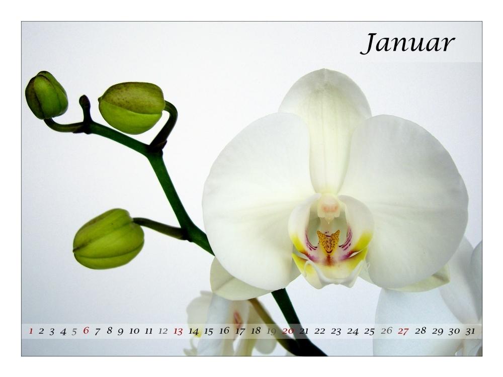 Januar 08