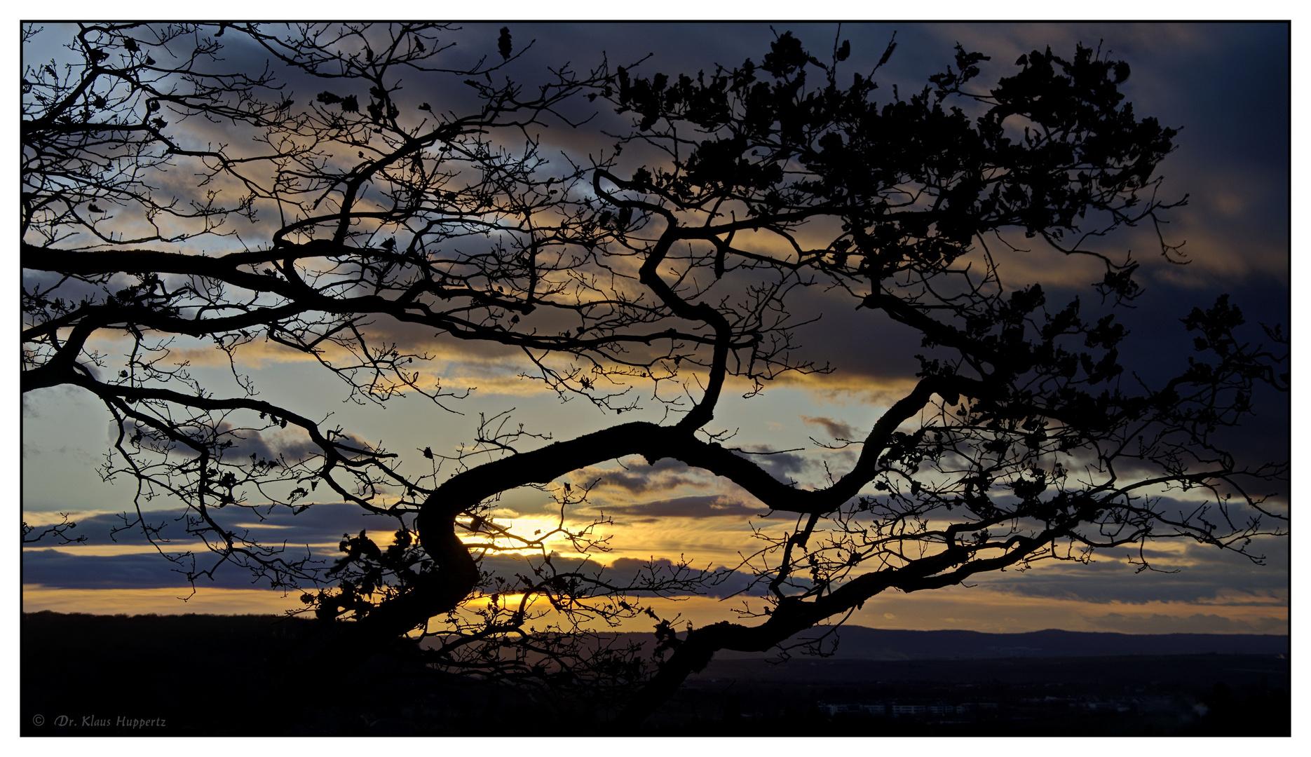 Januar-Sonne im Geäst