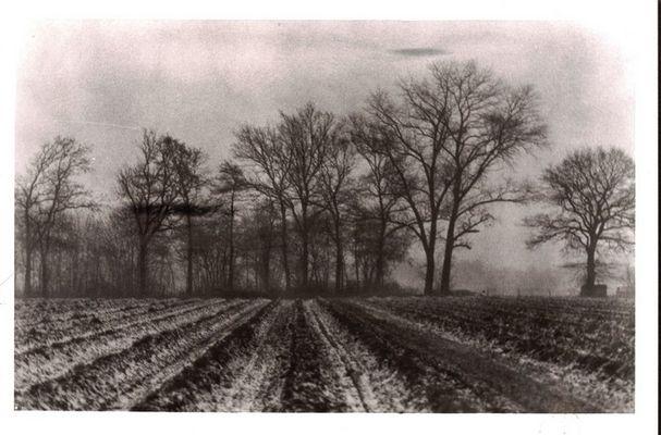 Januarmorgen in Norddeutschland